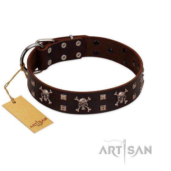 """Menacing Allure"" FDT Artisan Brown Leather Belgian Malinois Collar Embellished with Silvery Crossbones and Square Studs"