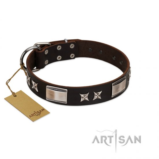 """Satin Beauts"" FDT Artisan Brown Leather Belgian Malinois Collar with Stars and Plates"