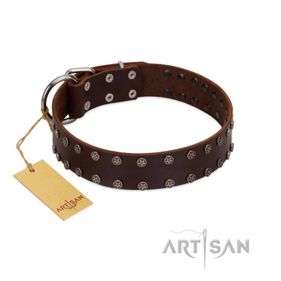 """Star Party"" Handmade FDT Artisan Brown Leather Belgian Malinois Collar with Silver-Like Studs"