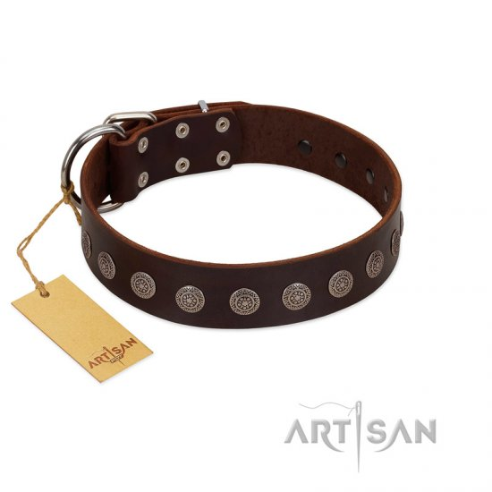 """Starry-Eyed"" Best Quality FDT Artisan Brown Designer Leather Belgian Malinois Collar with Small Plates"