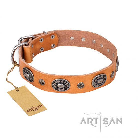 """Twinkle Twinkle"" FDT Artisan Incredible Studded Tan Leather Belgian Malinois Collar"