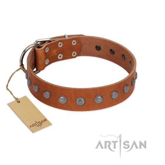 """Little Floret"" Fashionable FDT Artisan Tan Leather Belgian Malinois Collar with Silver-Like Adornments"