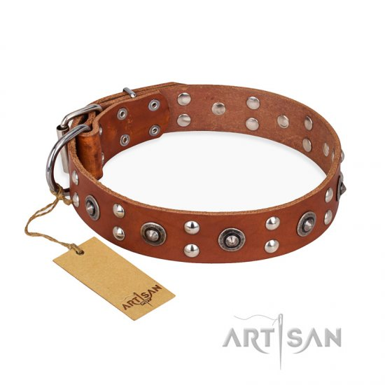 """Silver Elegance"" FDT Artisan Decorated Leather Belgian Malinois Collar with Old Silver-Like Plated Studs and Cones"
