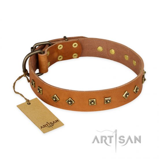 """Autumn Story"" FDT Artisan Leather Belgian Malinois Collar with Old Bronze Look Studs"