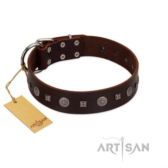 """Pure Sensation"" Exclusive FDT Artisan Brown Leather Belgian Malinois Collar with Fancy Brooches and Studs"