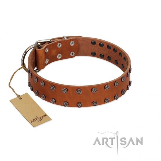 """Star Light"" Stylish FDT Artisan Tan Leather Belgian Malinois Collar with Silver-Like Studs"