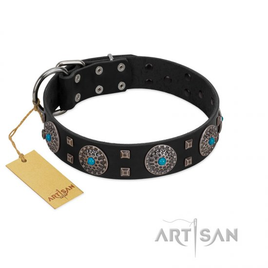 """Boundless Blue"" FDT Artisan Black Leather Belgian Malinois Collar with Chrome Plated Brooches and Square Studs"