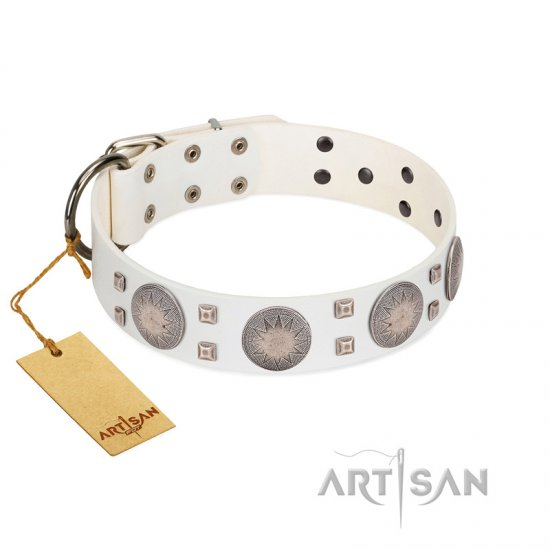 """Mighty Shields"" FDT Artisan White Leather Belgian Malinois Collar with Chrome Plated Shields and Square Studs"