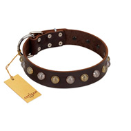 """Gape Buster"" FDT Artisan Brown Leather Belgian Malinois Collar with One Row of Studs"