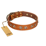 """Precious Relic"" FDT Artisan Tan Leather Belgian Malinois Collar Adorned with Old Bronze Look Studs"