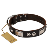 """Baller Status"" FDT Artisan Brown Leather Belgian Malinois Collar Adorned with a Set of Chrome Plated Studs and Plates"