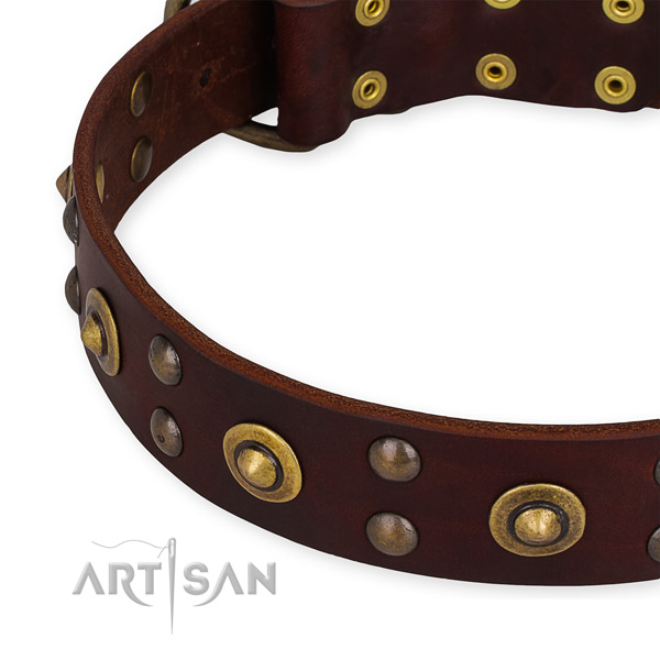 Genuine leather collar with corrosion proof fittings for your beautiful four-legged friend
