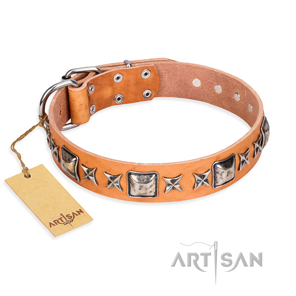 Fancy walking dog collar of top notch natural leather with embellishments