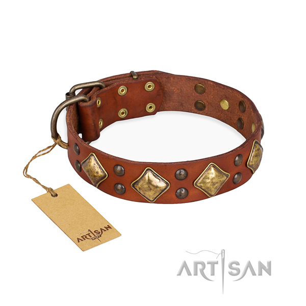 Daily walking decorated dog collar with rust resistant fittings