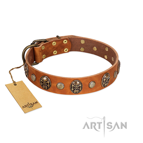 Fashionable leather dog collar for everyday walking