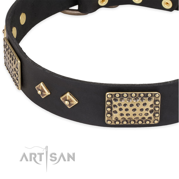 Rust resistant studs on genuine leather dog collar for your canine