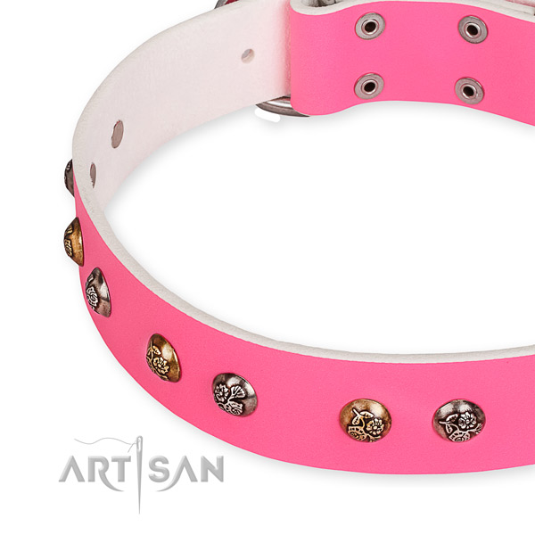 Full grain leather dog collar with unusual corrosion resistant embellishments