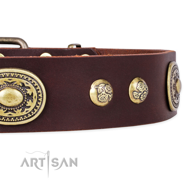 Decorated genuine leather collar for your attractive four-legged friend
