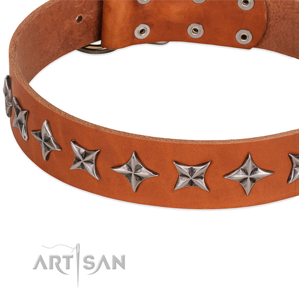 Fancy walking embellished dog collar of finest quality full grain genuine leather