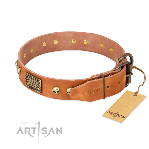 Rust resistant embellishments on daily walking dog collar