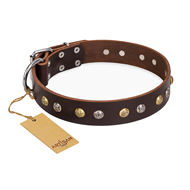 """Rare Flower"" FDT Artisan Brown Leather Belgian Malinois Collar Adorned with Old-look Hemisphere Studs"