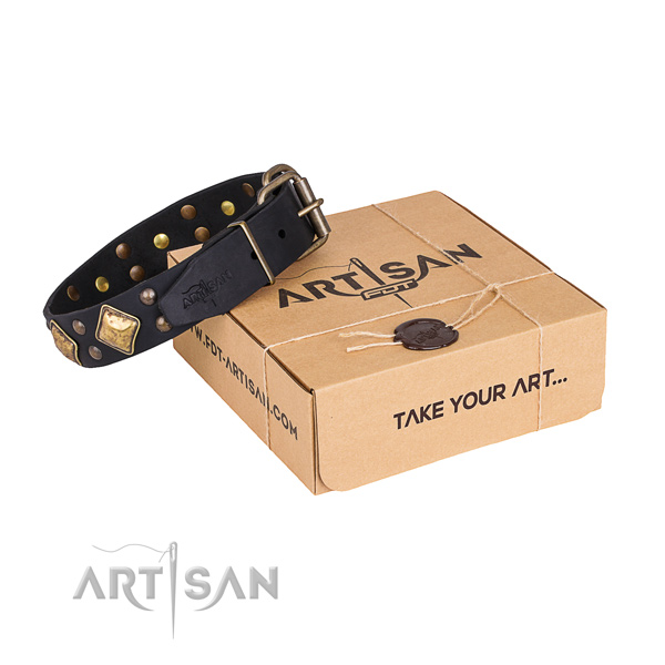 Everyday use dog collar with Amazing rust-proof adornments