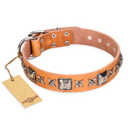 """Glamour Finery"" FDT Artisan Female Belgian Malinois collar of natural leather with stylish old-looking circles"
