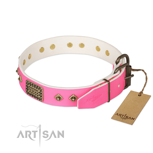 Corrosion proof adornments on everyday walking dog collar
