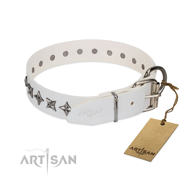 Walking studded dog collar of quality natural leather