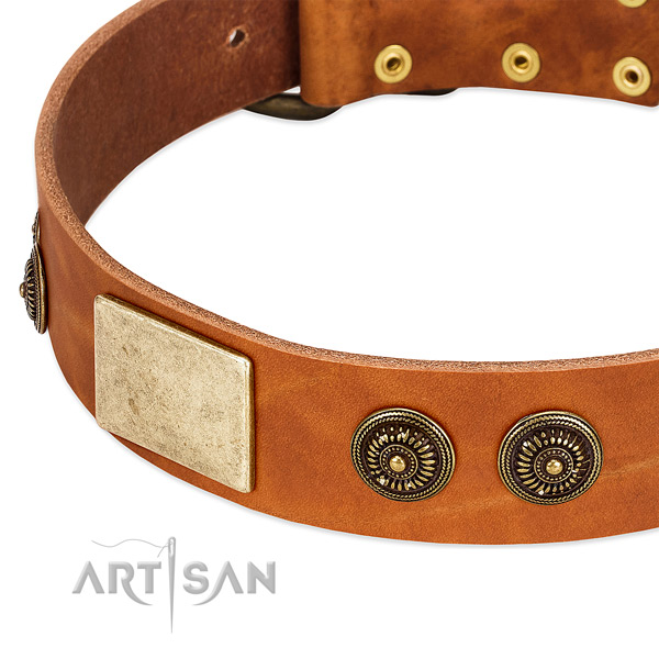 Impressive dog collar created for your impressive four-legged friend