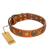 """Rockin' Doggie"" FDT Artisan Tan Leather Belgian Malinois Collar Adorned with Stars and Skulls"