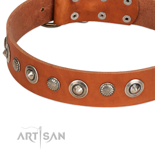 Stylish studded dog collar of finest quality full grain natural leather