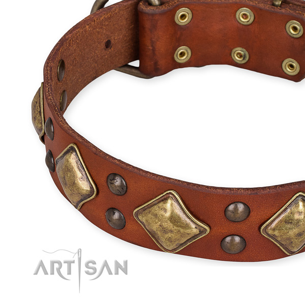 Full grain natural leather collar with rust resistant buckle for your stylish canine