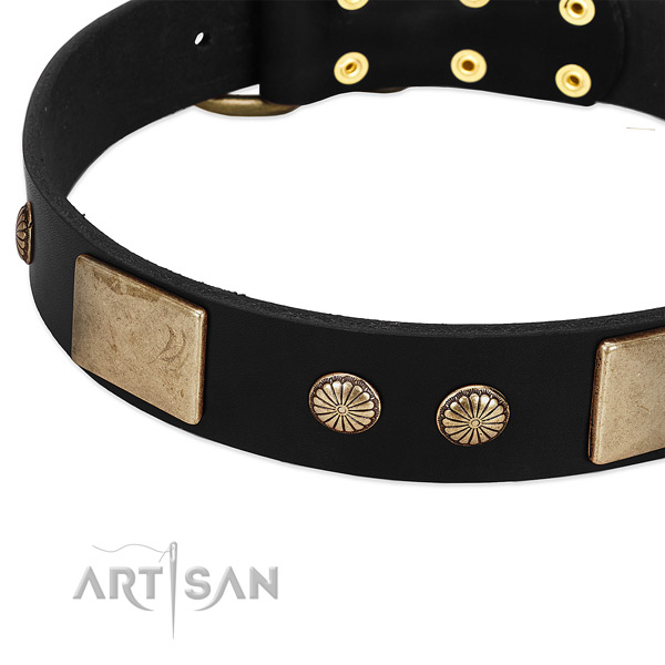 Genuine leather dog collar with embellishments for everyday walking