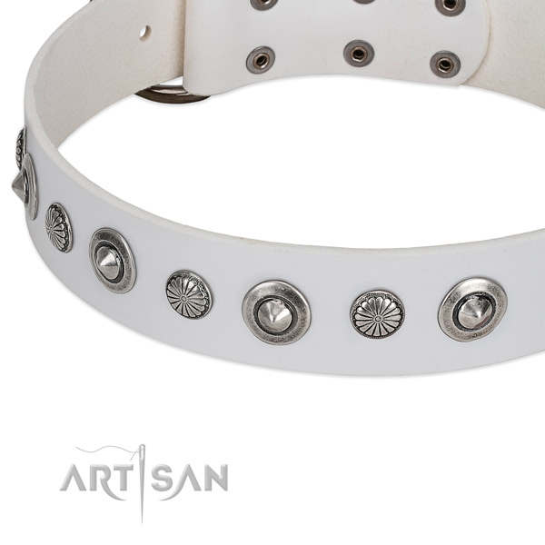 Natural leather collar with corrosion proof fittings for your stylish dog