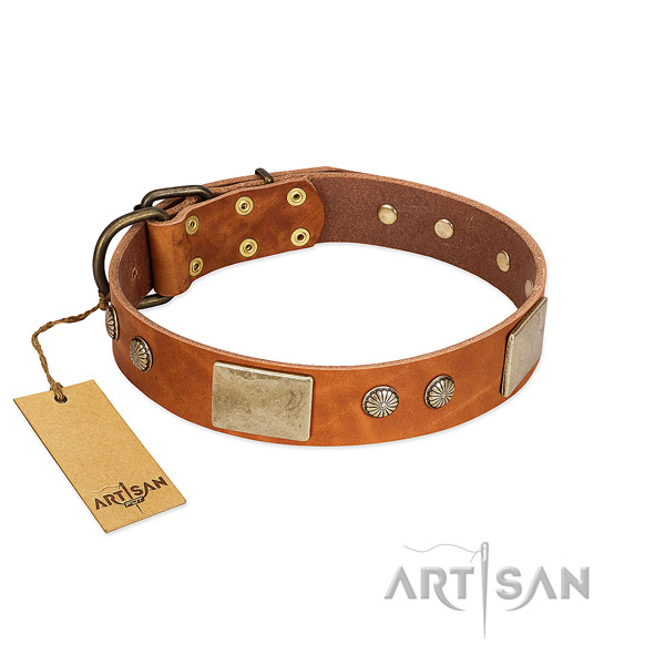 Adjustable full grain natural leather dog collar for daily walking your four-legged friend