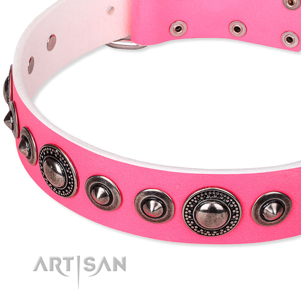 Daily use studded dog collar of top quality full grain leather