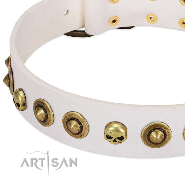 Top notch studs on genuine leather collar for your dog