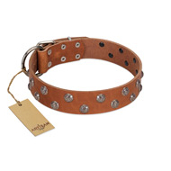 """Waltz of the Flowers"" Handmade FDT Artisan Tan Leather Belgian Malinois Collar with Chrome-plated Engraved Studs"