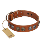 """Luxurious Life"" Premium Quality FDT Artisan Tan Leather Belgian Malinois Collar with Round Adornments"