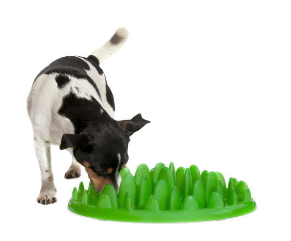 Safe healthy eating dog feeder for Belgian Malinois