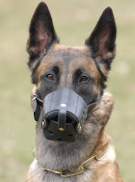 Everyday Belgian Malinois Leather dog muzzle