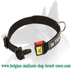 Excellent Belgian Malinois Nylon Dog Collar