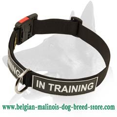 Malinois Training Nylon Dog Collar