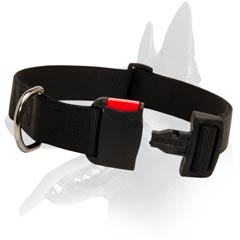 Belgian Malinois Nylon Dog Collar