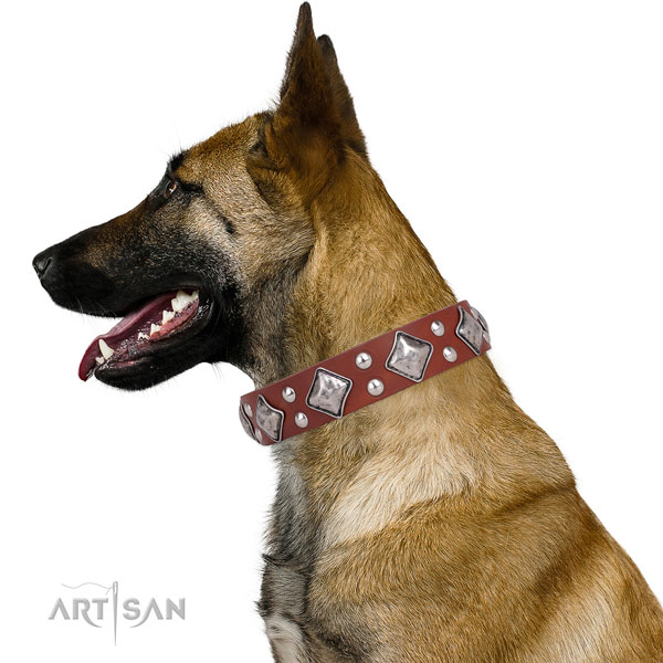 Walking adorned dog collar made of quality genuine leather