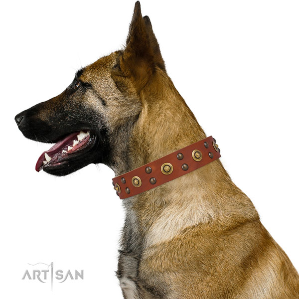 Basic training dog collar with incredible studs