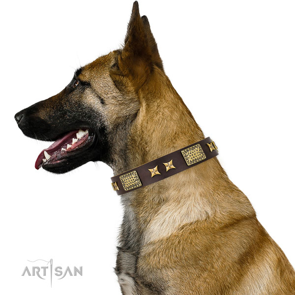 Fancy walking dog collar with trendy adornments