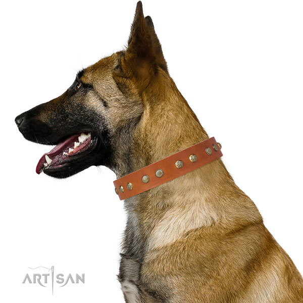 Incredible adornments on everyday walking full grain natural leather dog collar