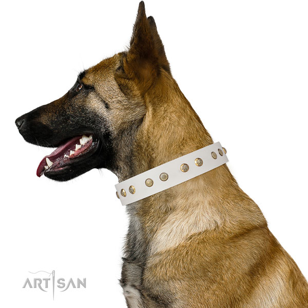 Amazing studs on walking natural genuine leather dog collar